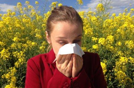 Como aliviar os sintomas da rinite alérgica, principalmente no período da primavera
