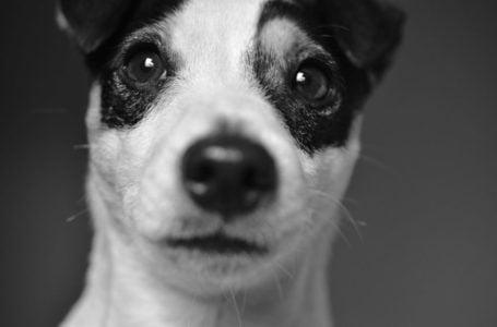 Olhar de um cão. Por que as pessoas abandonam seus animais de estimação? Por Ella_87 de Pixabay
