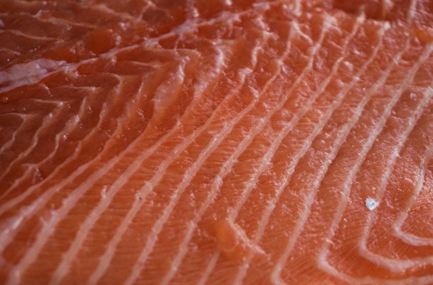 Salmão cultivado versus salmão selvagem: revisão de pesquisa